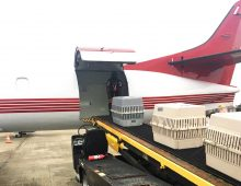 Animals displaced by Irma flown to new homes